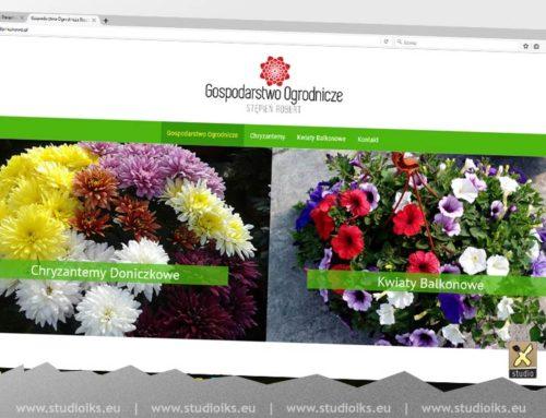 chryzantemy doniczkowe strona www